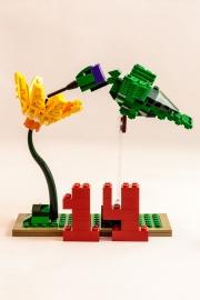 quattordici piume fan volare il colibrì